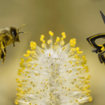 L'abeille artificielle