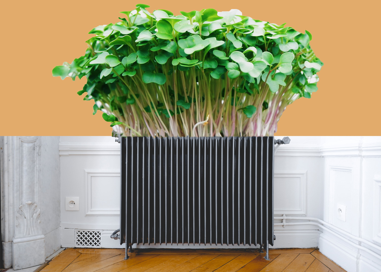 Les plantes chauffantes