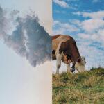 Le lait bas méthane