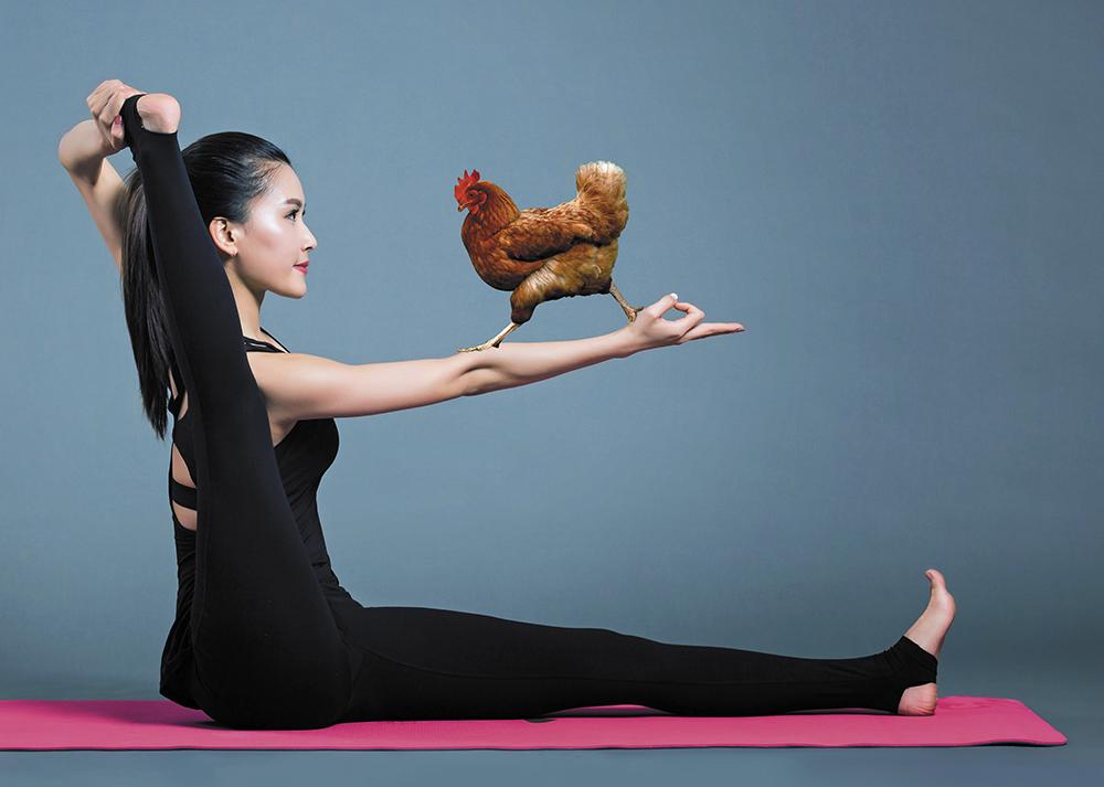 Yoga au poulet