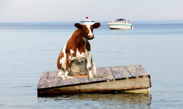 Vache à tribord!